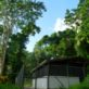 Purpose built facilities for keeping mountain chickens, Roseau, Dominica